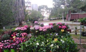 8η Ανθοκομική: Μουσικοχορευτικό φινάλε αύριο Κυριακή στο Πάρκο του ΟΣΕ