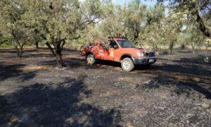 35 στρέμματα με ελαιόδεντρα κάηκαν στην Αιθαία – Συνελήφθη 45χρονη