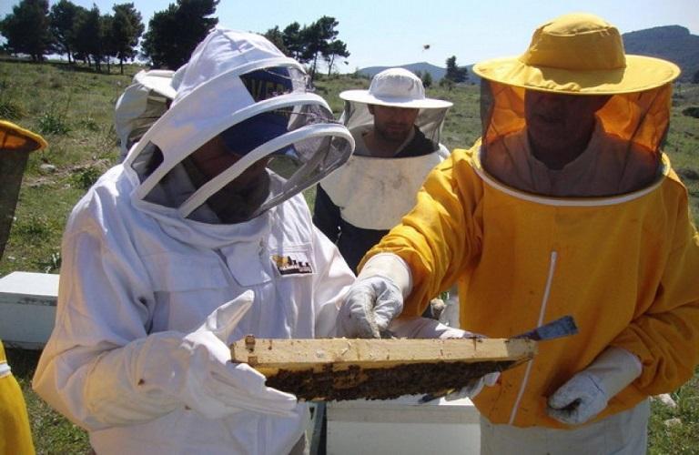 Τριήμερο σεμινάριο μελισσοκομίας στην Καλαμάτα