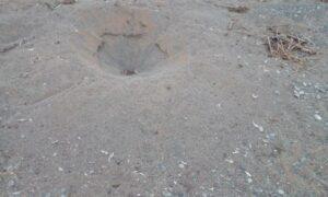 Δυτική παραλία: Κατέστρεψαν τις φωλιές καρέτα-καρέτα και έφαγαν τα αυγά αδέσποτα σκυλιά