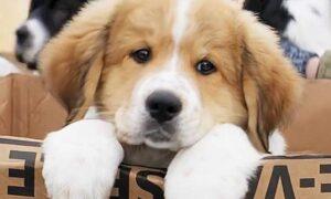 10 υγιεινά φαγητά τα οποία πρέπει να δίνετε στον σκύλο σας