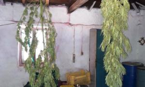Δύο συλλήψεις για ναρκωτικά και όπλα στη Μάνη