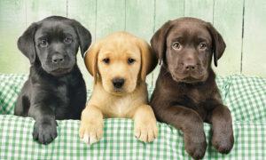 Οι επιστήμονες απαντούν: Ποια ακριβώς ηλικία θα είχαν οι σκύλοι αν ήταν άνθρωποι;