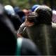 """Ένωση Ξενοδόχων Μεσσηνίας για μετανάστες: """"Το θέμα είναι να μη φύγουν τελικά διωγμένοι και όσοι ανέλαβαν να τους φιλοξενήσουν"""""""