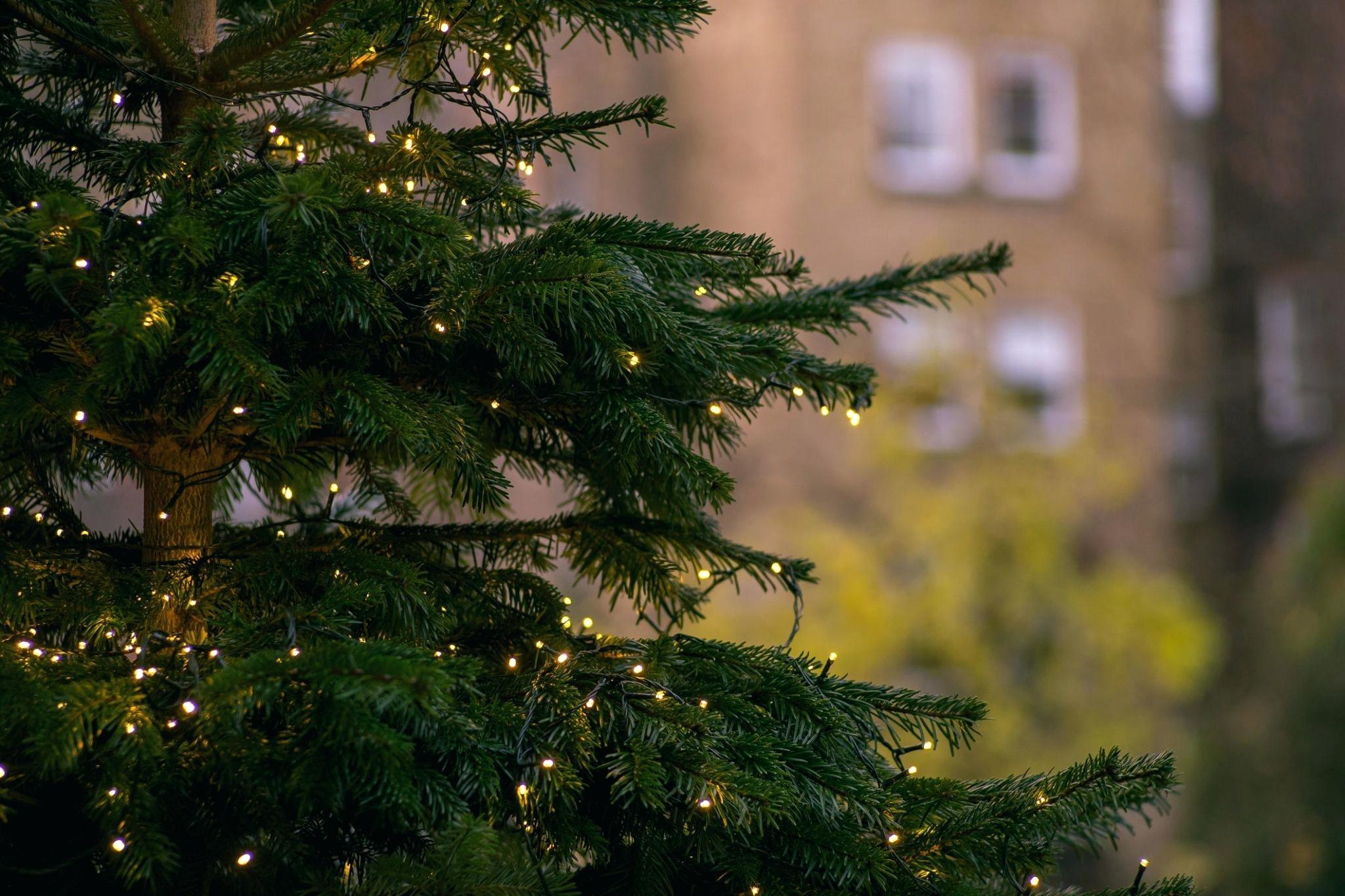 Μελιγαλάς: Την Κυριακή η φωταγώγηση του Χριστουγεννιάτικου δέντρου
