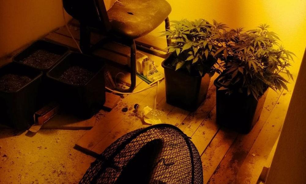 """25 συλλήψεις στη Μεσσηνία μέσα σε τρεις μέρες-Κατασχέθηκαν 2 χασισοφυτά """"υδροπονικής"""" καλλιέργειας"""
