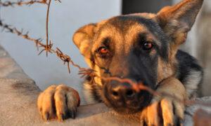 Βορίδης: Αυστηροί έλεγχοι και βαριά πρόστιμα για την κακομεταχείριση ζώων